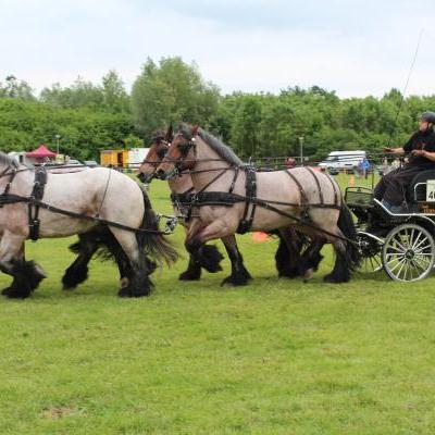 Paardenfokker