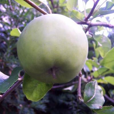 Fruitteler
