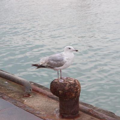 Vogelaar