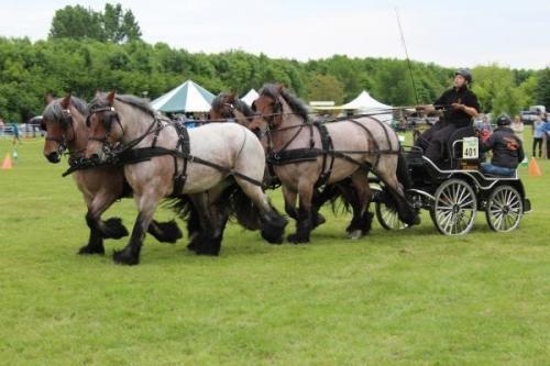 Vierspan paarden