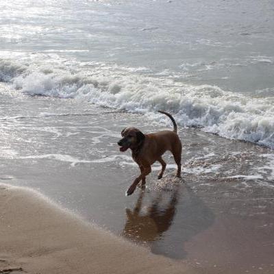 Hondenuitlater