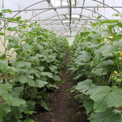 Planten in kas