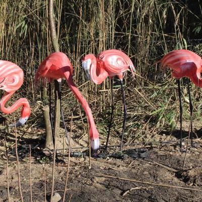 Flamingos dierentuin
