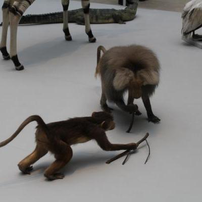 Opgezette apen