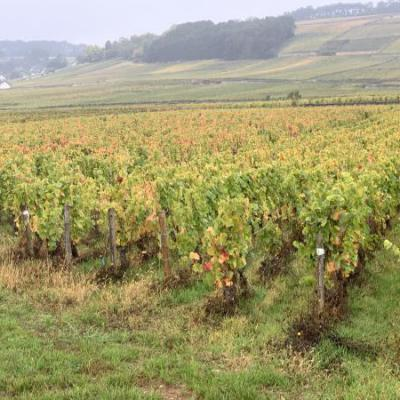 Franse wijnvelden