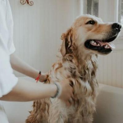 Hondenverzorger
