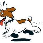 Hondenuitlaatservice Neus in de wind