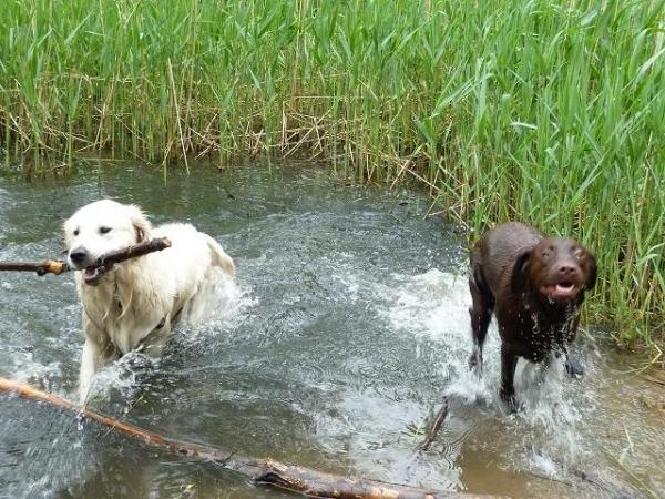 Afbeelding van Animal Care Almere