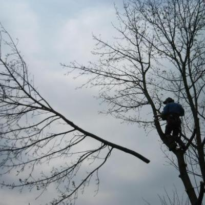 Bosbouwer