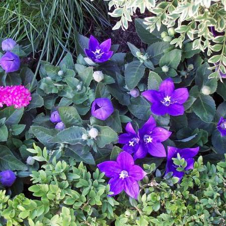Opleidingen voor tuinarchitect for Opleiding tuin