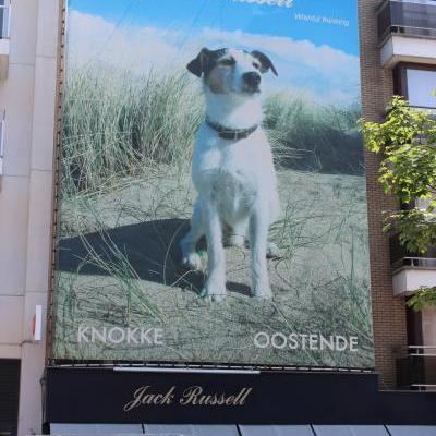 Jack Russell model