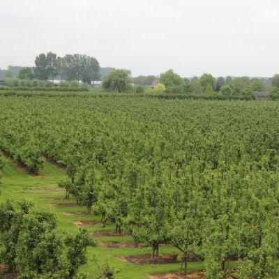 Groothandelaar (land- en tuinbouwsector)